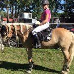 horse-b1
