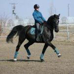 horse-f1