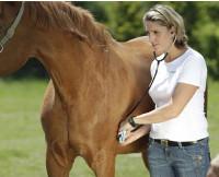Pferdetierarzt - Mag. Nicole Mengler